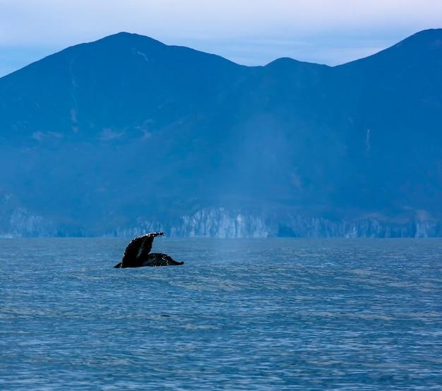 Hermoso paisaje marino con cola de ballena