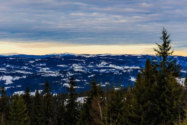 Hermoso paisaje místico de árboles coníferos que crecen en una colina con el telón de fondo de la noche fría de invierno nublado de alta montaña