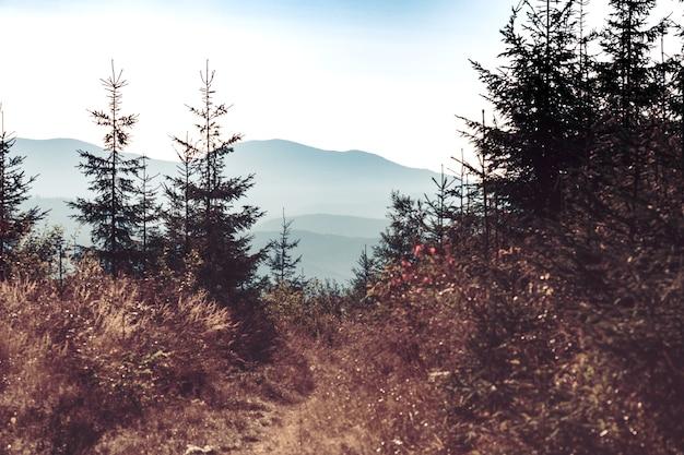 Hermoso paisaje de montaña de siluetas. fondo de bosques de pinos en la niebla de la mañana