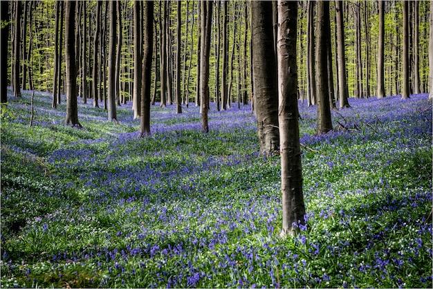Hermoso paisaje de muchos árboles en el campo de flores púrpuras