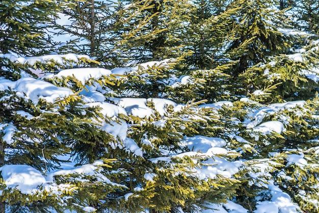 Hermoso paisaje de naturaleza al aire libre con arbol de navidad.