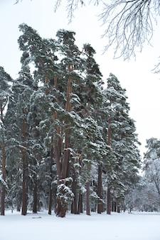 Hermoso paisaje nevado de invierno en el parque