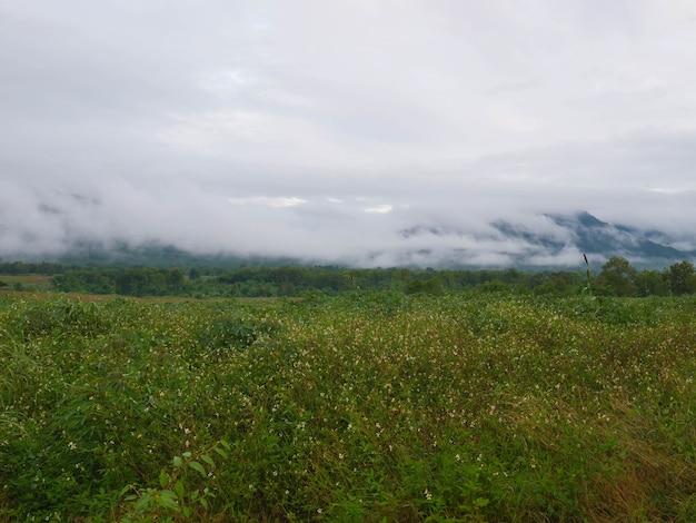 Hermoso paisaje de niebla en las montañas