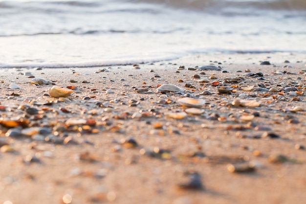 Hermoso paisaje oceánico y conchas