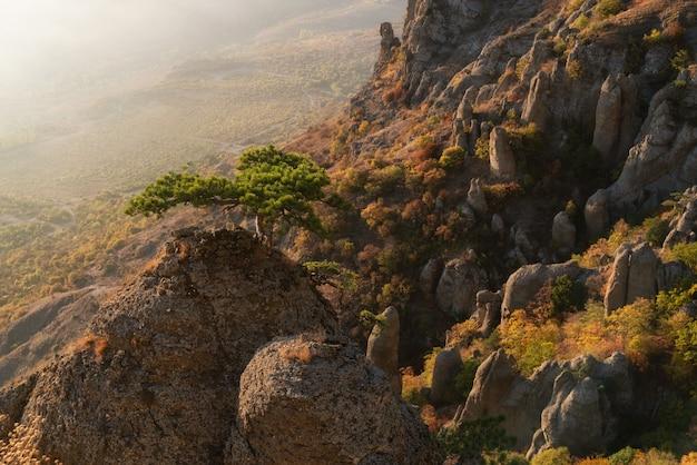 Hermoso paisaje otoñal en las montañas. árbol sobre una roca sobre un fondo de niebla en las montañas. crimea, monte demerdzhi.