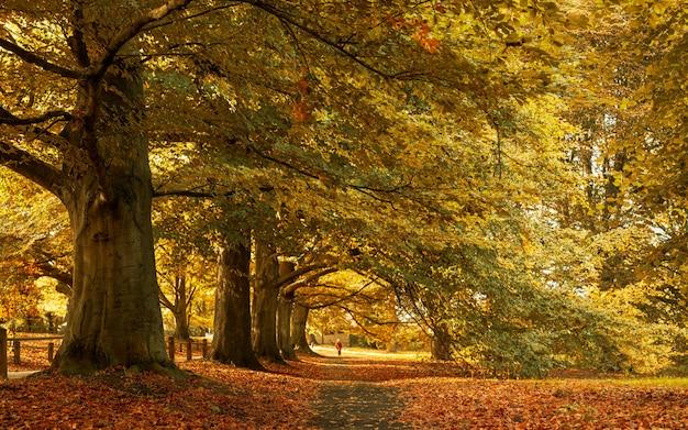 Hermoso paisaje de otoño en el parque con las hojas amarillas caídas en el suelo