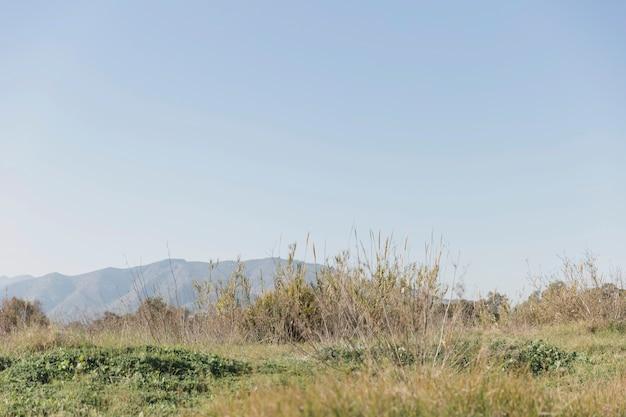 Hermoso paisaje con pasto y colinas