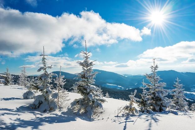 Hermoso paisaje pintoresco pequeños abetos nevados crecen en una colina nevada