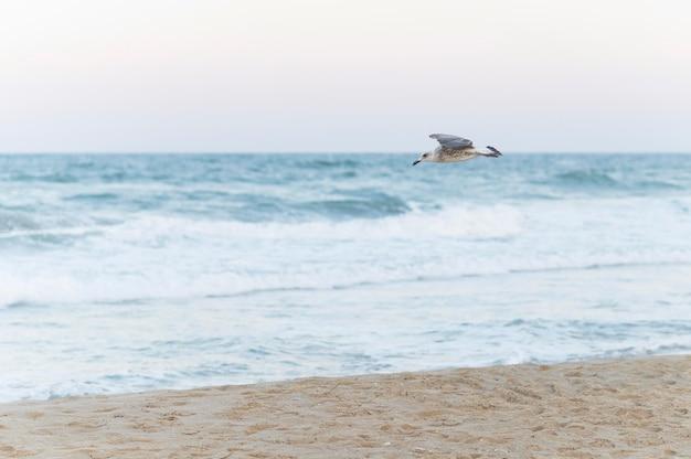 Hermoso paisaje de playa con gaviotas volando