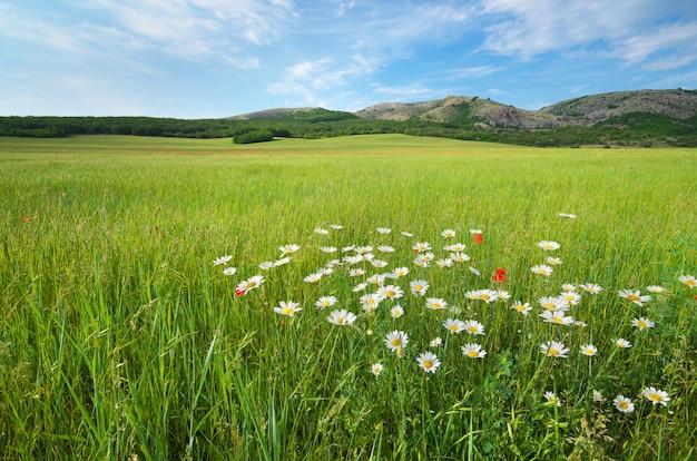 Hermoso paisaje de pradera de primavera verde.