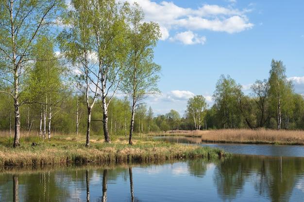 Hermoso paisaje de primavera con abedules junto al estanque