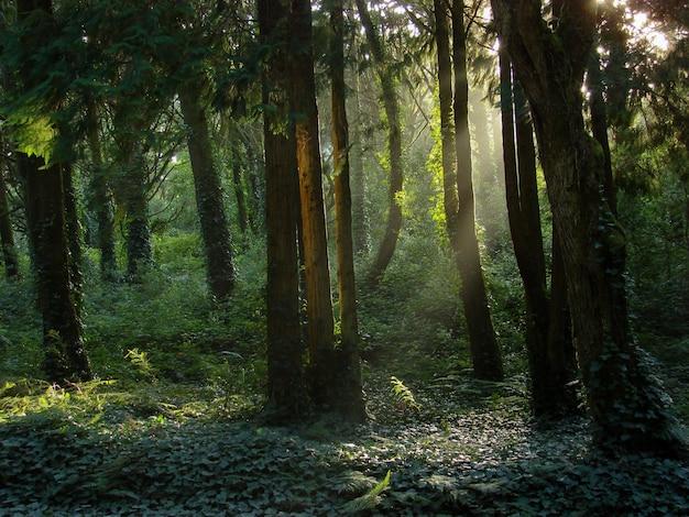 Hermoso paisaje del sol brillando sobre un bosque verde lleno de diferentes tipos de plantas