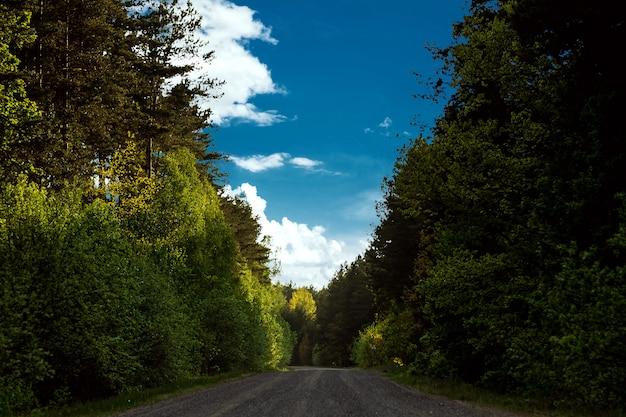 Hermoso paisaje de verano verde bosque y camino en el bosque.