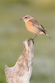 Hermoso pájaro salvaje