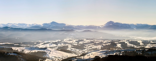 Hermoso panorama de invierno con nieve fresca. ajardine con los pinos spruce, el cielo azul con la luz del sol y las altas montañas cárpatas en fondo.