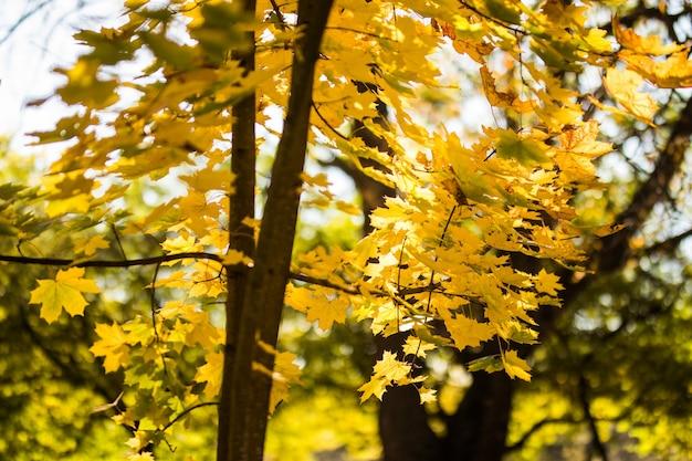 Hermoso parque de otoño. árboles y hojas otoñales. paisaje de otoño. aparcar en otoño. bosque en otoño.