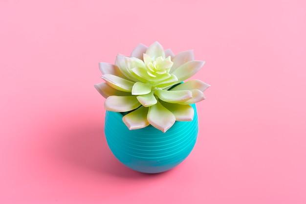 Hermoso patrón de suculenta verde aislado sobre fondo rosa