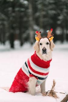 Hermoso perro en una blusa y cuernos de reno mira a la cámara