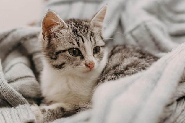 Hermoso primer lindo gato, descansando de una manera cálida y acogedora.