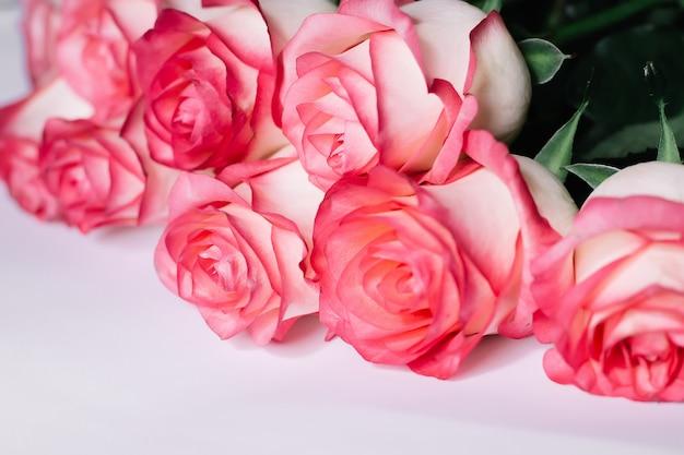 Hermoso ramo de florecientes rosas de tallo largo rosa sobre fondo blanco.
