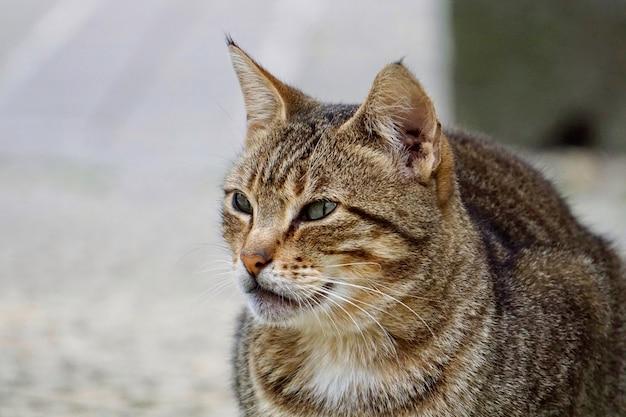 Hermoso retrato de gato callejero en la calle