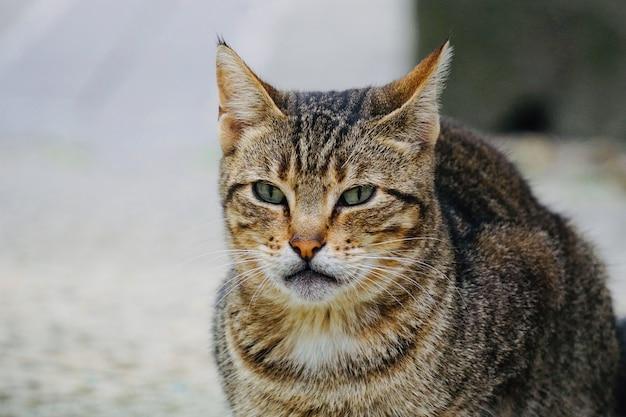 Hermoso retrato de gato callejero, tema animal