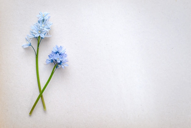 Hermoso saludo fotográfico con pequeñas flores azules sobre un fondo de papel blanco