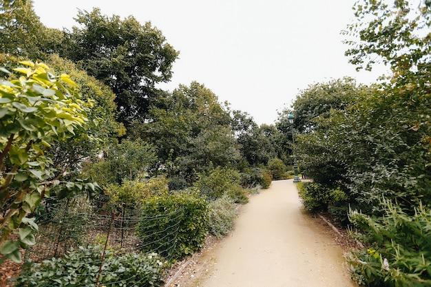 Hermoso sendero del parque con árboles y césped alrededor.