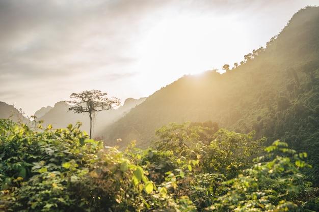 Hermoso sol poniente sobre un paisaje de montaña de bosque
