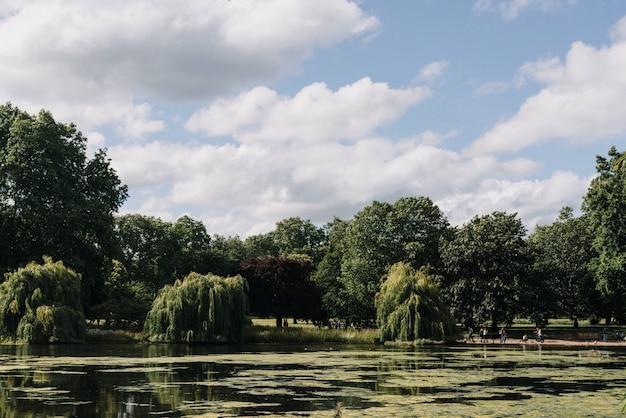 Hermoso tiro ancho de árboles cerca de un lago bajo un cielo azul claro con nubes blancas