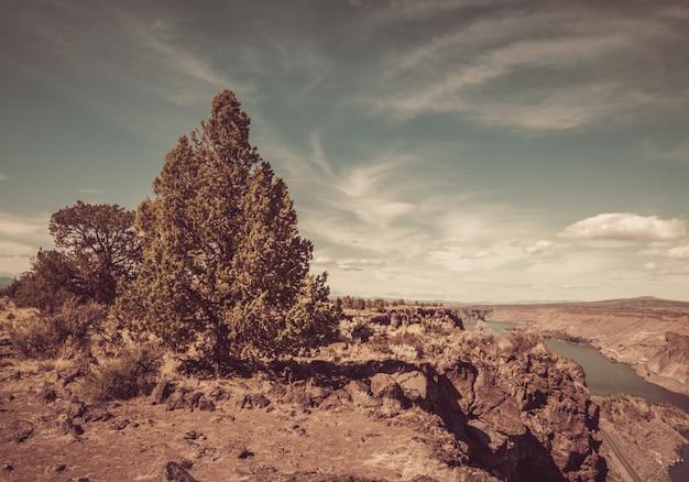 Hermoso tiro de árboles en el acantilado con un río en la distancia bajo un cielo nublado azul