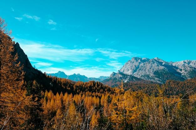Hermoso tiro de árboles amarillos y montañas con cielo azul