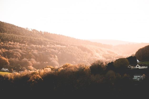 Hermoso tiro de árboles marrones y vegetación en las colinas y montañas en el campo al atardecer