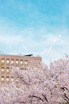 Hermoso tiro de árboles de sakura en una zona urbana de la ciudad