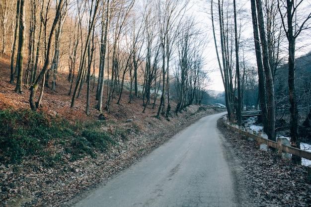 Hermoso tiro de árboles secos y desnudos cerca de la carretera en las montañas en un frío día de invierno