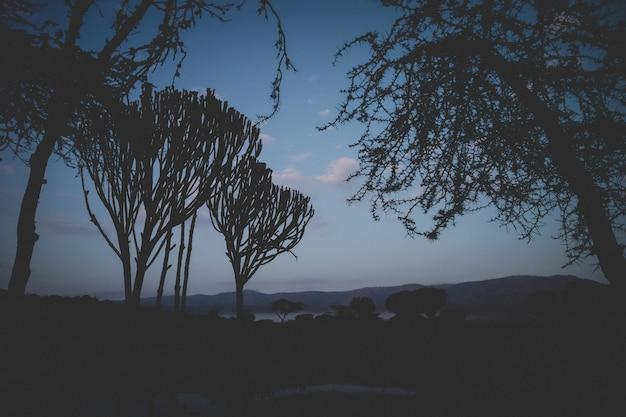 Hermoso tiro de árboles tropicales en chui lodge en kenia.