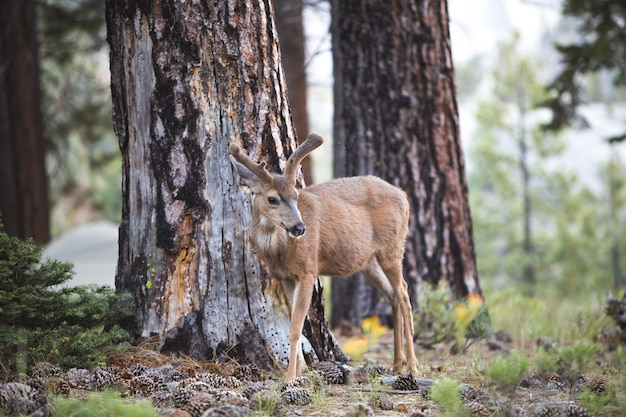 Hermoso tiro de un ciervo marrón en el bosque