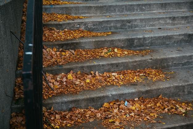 Hermoso tiro de coloridas hojas de otoño caídas en las escaleras