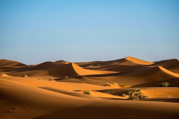 Hermoso tiro de dunas de arena con arbustos y un cielo despejado