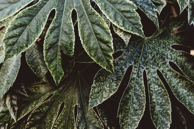 Hermoso tiro de exóticas hojas tropicales