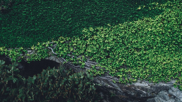 Hermoso tiro de plantas que crecen en una roca con ramas en un día soleado