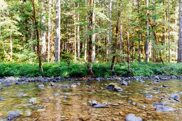 Hermoso tiro de un río lleno de rocas en medio de un bosque
