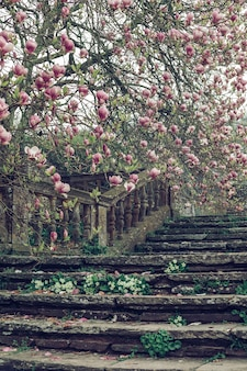 Hermoso tiro vertical de una antigua escalera de piedra cerca de un árbol de cerezos en flor