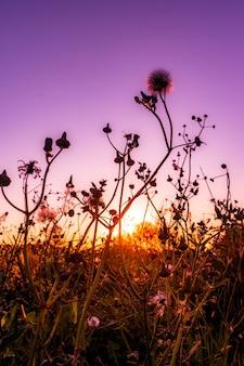 Hermoso tiro vertical de flores que florecen en un campo en el colorido atardecer