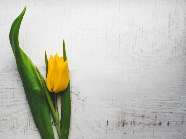 Hermoso tulipán tumbado en una mesa blanca
