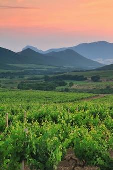 Hermoso viñedo en el valle de la montaña al atardecer.
