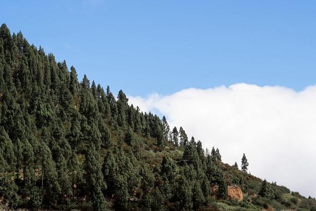 Hermosos árboles sobre las nubes