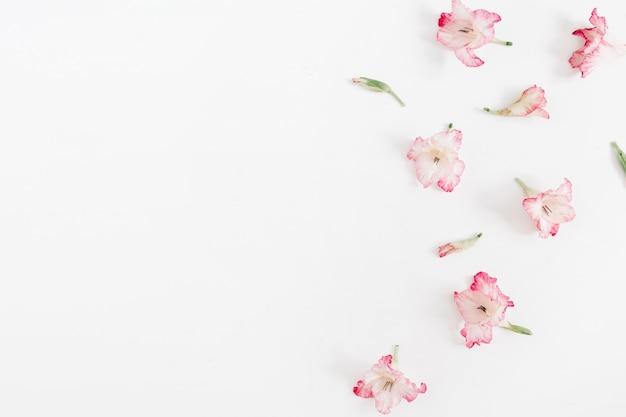 Hermosos capullos de flor de gladiolo rosa sobre blanco