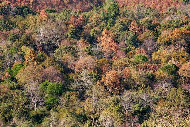 Hermosos colores del bosque en la estación seca.