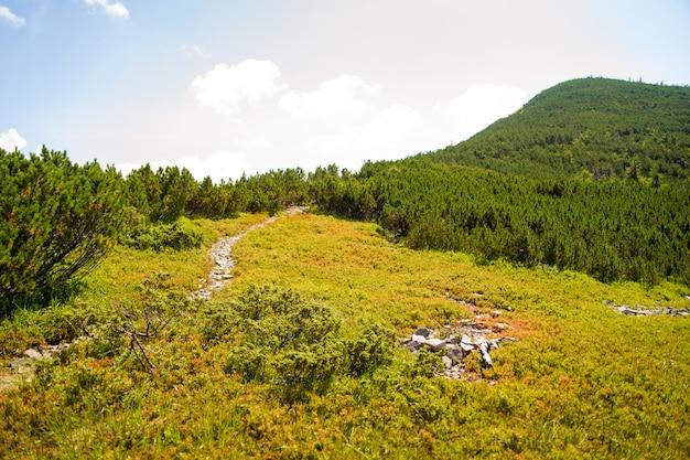 Hermosos prados verdes en las montañas de los cárpatos en ucrania